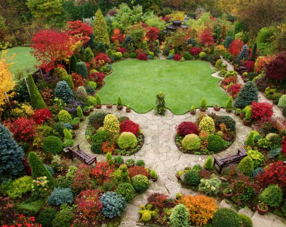 Формирование растений. Ландшафтный дизайн