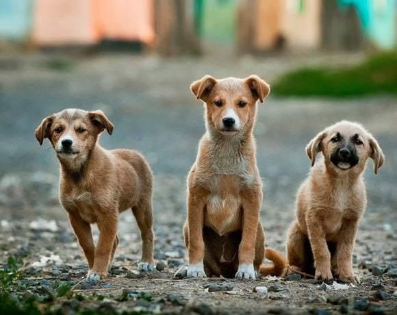 Люди с большим сердцем. Как помочь приюту для собак?