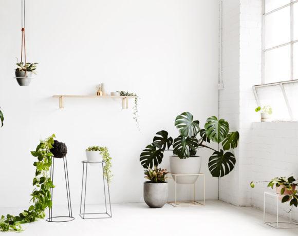 Как гармонично вписать растения в интерьер