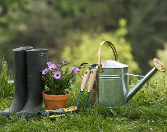 Рекомендации по уходу за садом