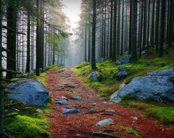 «Ментальный детокс»: 5 причин стать свидетелем пробуждения природы в Карелии