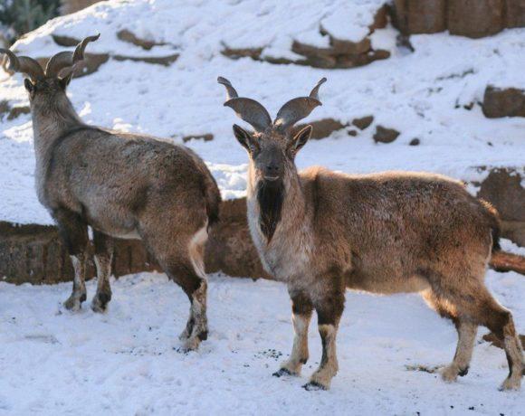 Зимняя сказка в Московском зоопарке