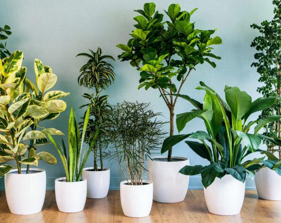 13 растений, идеальных для дома