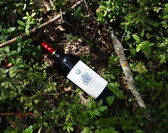 """Винный вторник: Meotida Pinot Noir 2016 """"Вилла Романов"""""""