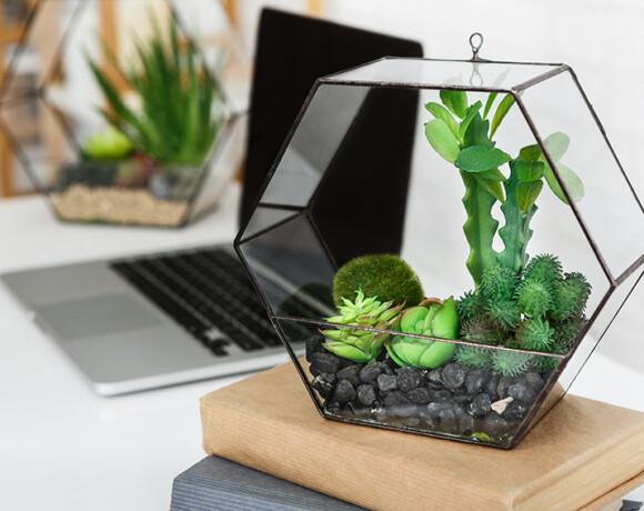 Живой декор и где ему обитать: простые решения для растений в интерьере