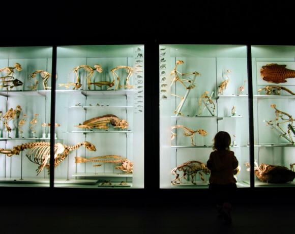 Музеи для детей
