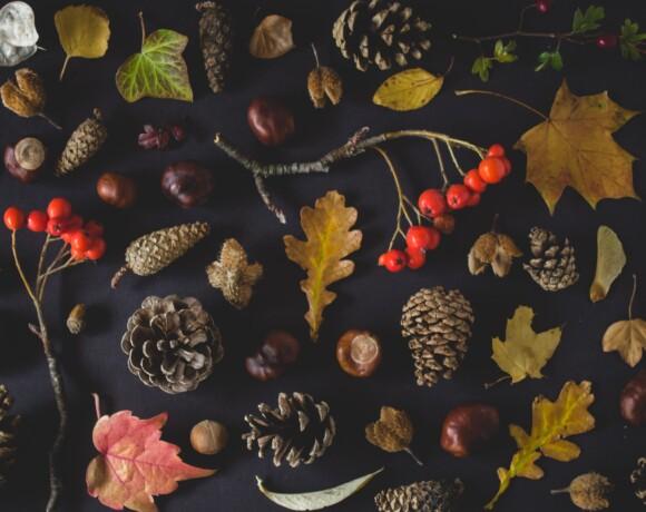 Культурный ноябрь: афиша, которую вы ждали