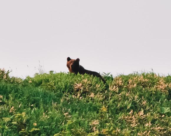 Как не попасть на завтрак к медведю. Очерк очевидца