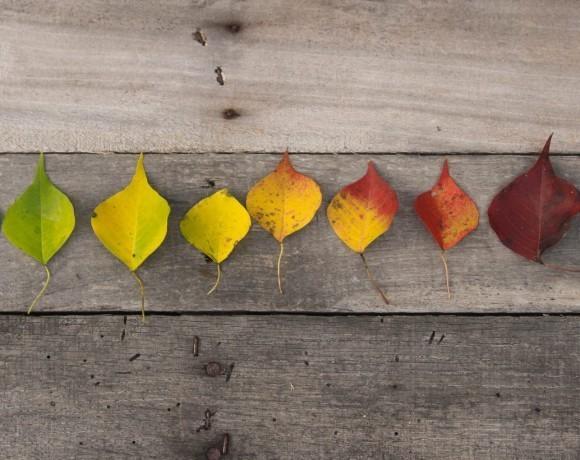 Советы психолога: Маленькие радости, или как побороть сезонную хандру