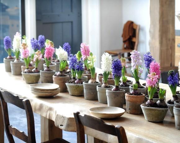 Луковичные растения. Живой декор