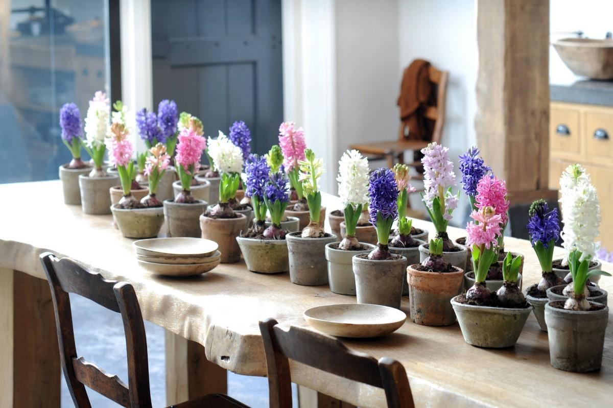 Цветы в горшках луковицы