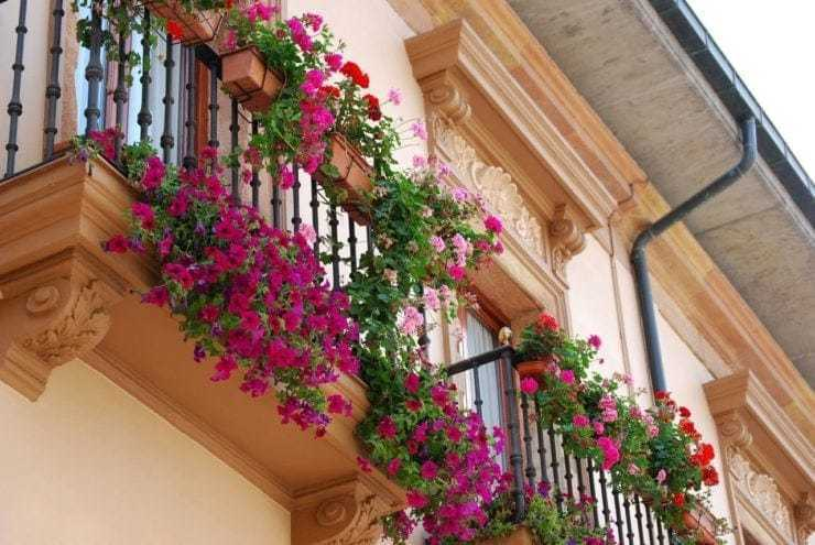 Цветы на балконе уход. - остекление - каталог статей - балко.
