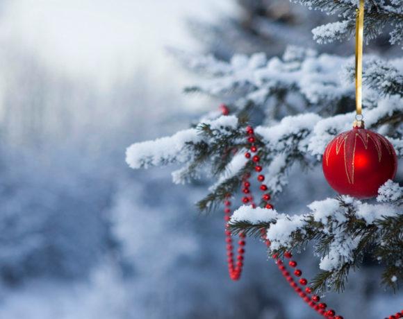 Выбираем новогоднюю ель для загородного участка