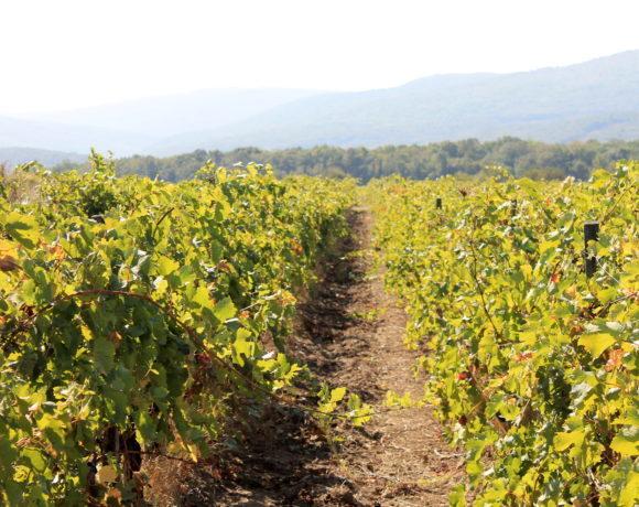 Винный вторник: винодельня Chateau Le Grand Vostok. История успеха